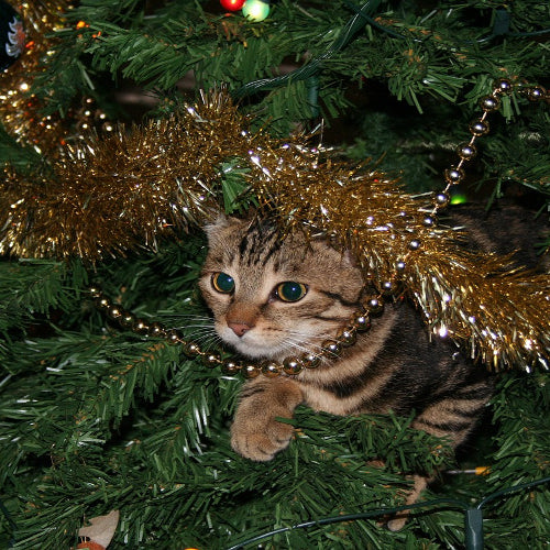 Tips to Keep Pets and Christmas Trees Separate