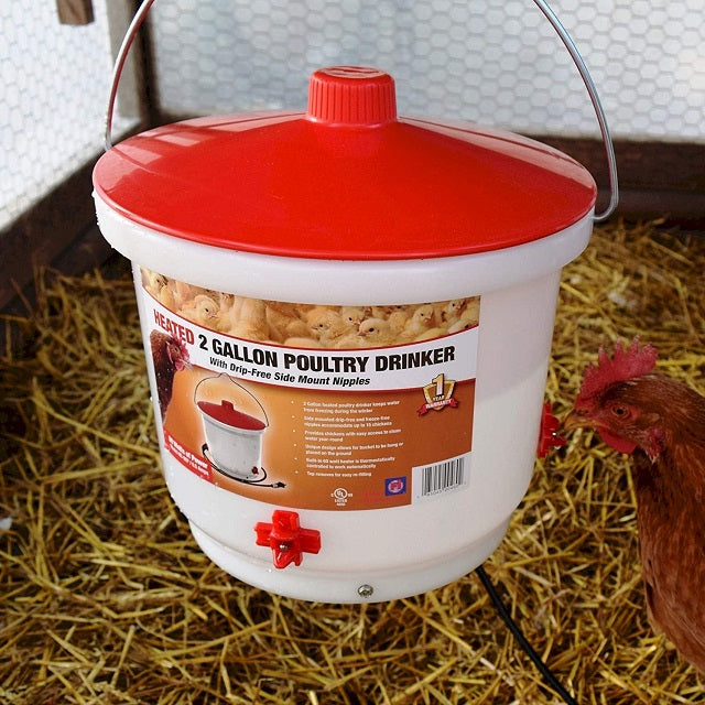 Farm Innovators HB-60P Heated 2-Gallon Poultry Drinker