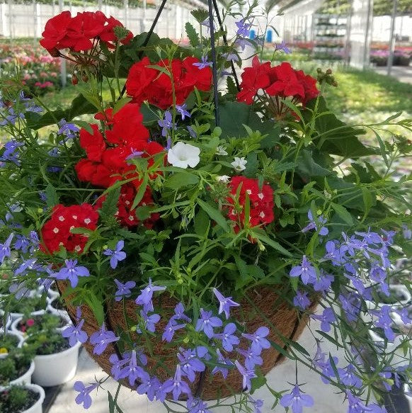 Flowering Hanging Baskets, Premium - Assorted Styles