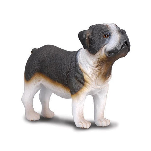 CollectA Bull Dog