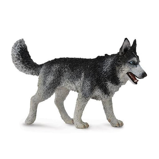 CollectA Siberian Husky