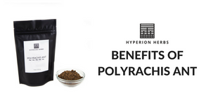 Benefits of Polyrachis Ant