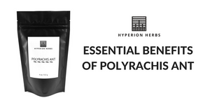 Essential Benefits of Polyrachis Ant