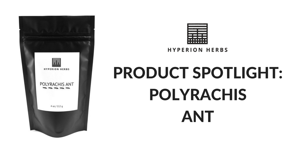 Product Spotlight: Polyrachis Ant