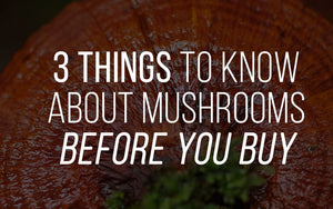 3 Things You Need To Know Before Buying Medicinal Mushrooms