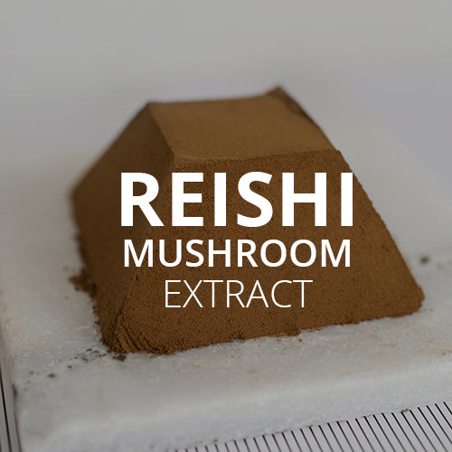 Reishi: The Real Magic Mushroom