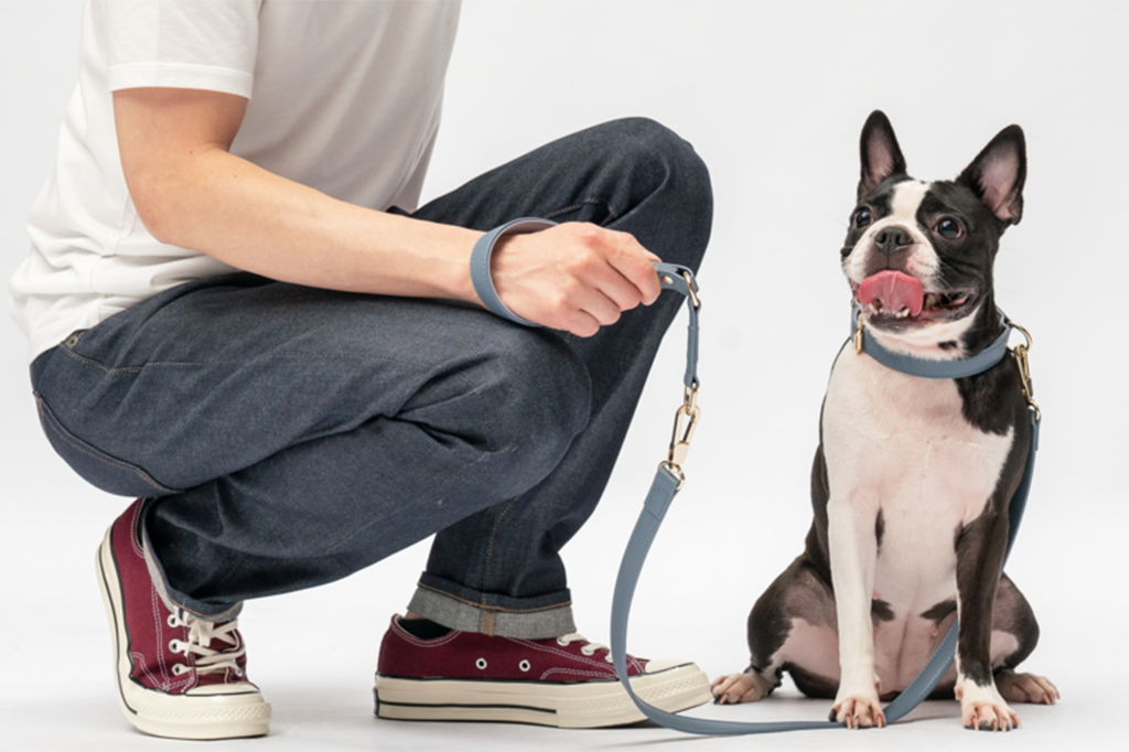 Dog Leash Training: Do it in 5 Easy Steps