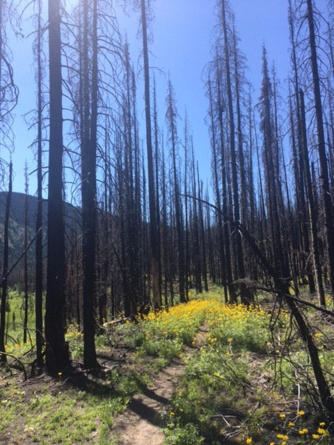 Burns areas are hot, at times depressing, places to hike. But they are also spots of hope, reminders of natural of life cycles cycling along.