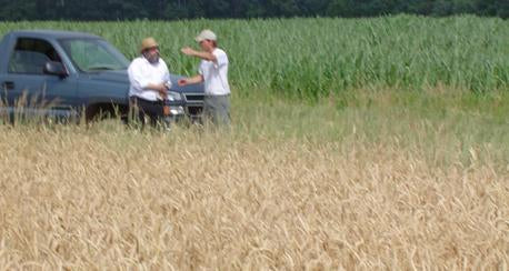 Rabbi at wheat cutting