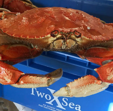 Cooked Whole Dugeness Crab 1.75-2# Each