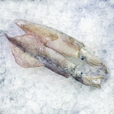 Monterey Squid - (Individually Quick Frozen) 1 pound per order