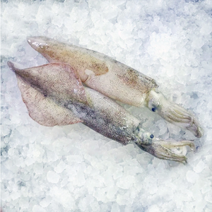 Individually Quick Frozen Monterey Squid - 1 pound per order