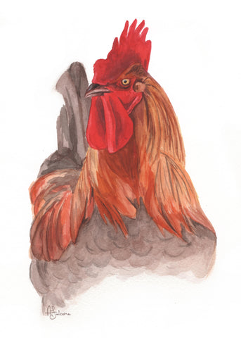 Rooster - giclée print