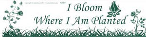 I Bloom Where I Am Planted, bumper sticker - Tree Of Life Shoppe