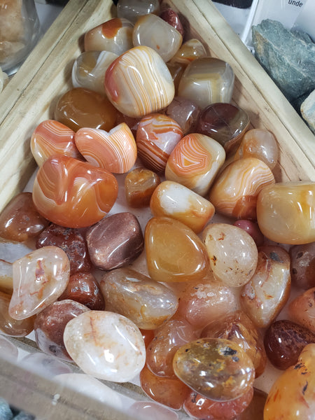 Carnelian - Tumbled - Tree Of Life Shoppe