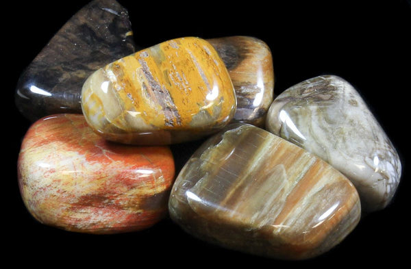 Petrified Wood - Tumbled - Tree Of Life Shoppe