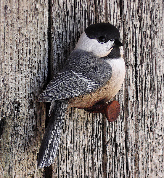 "Black-capped Chickadees ""Caretakers"""