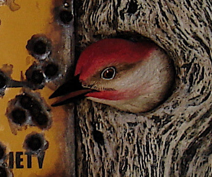 "Red-bellied Woodpecker ""Posted"""