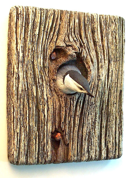 Demi Knot Hole White-breasted Nuthatch
