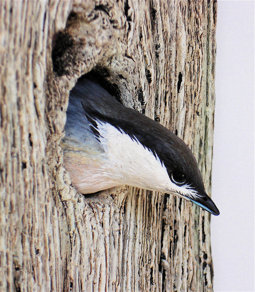 Pygmy Nuthatch Detail