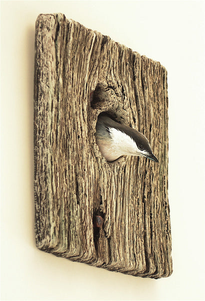 Demi Knot Hole Pygmy Nuthatch right