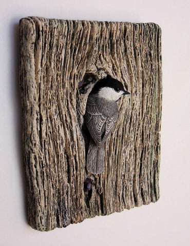 "Black-capped Chickadee ""Demi Knot Hole"""