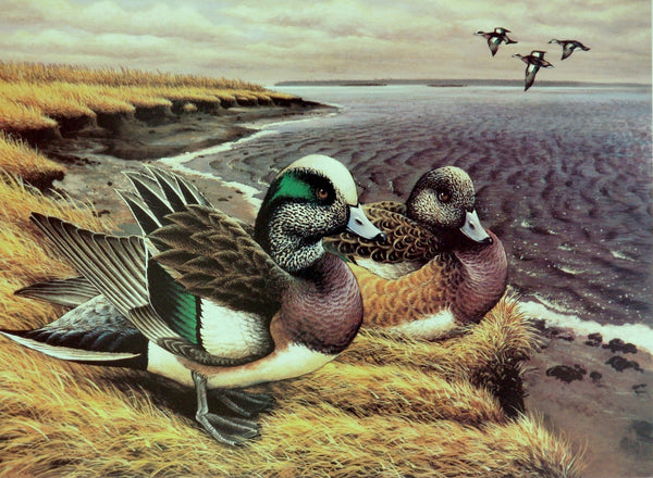 "Widgeon Pair ""Old Friends"" Print"