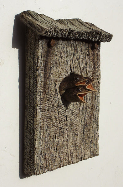 Wren Chicks
