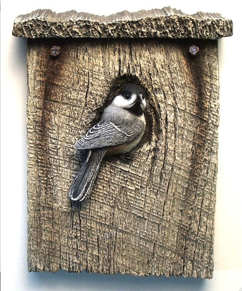 Black-capped Chickadee Rooftop