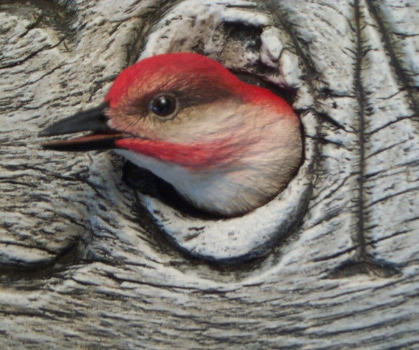 Red-bellied Woodpecker Welcome Detail