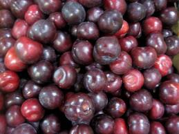 PLUMS Organic Early Queen per 500g