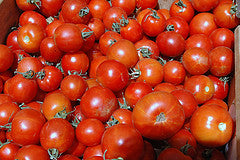 TOMATO Bulk Organic Round 2nds 10kg *3 day lead time*