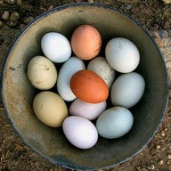 EGGS Local Organic Free-range 700g 1doz
