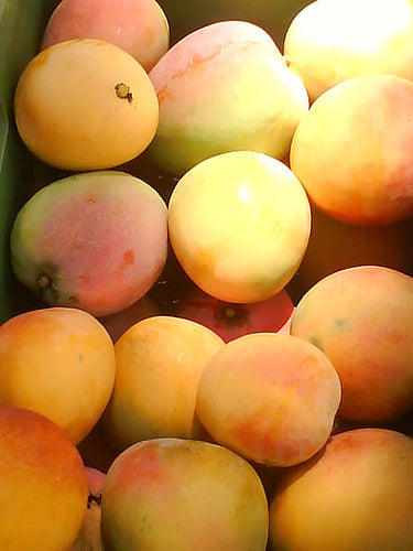 MANGO Fresh Local Kensington each