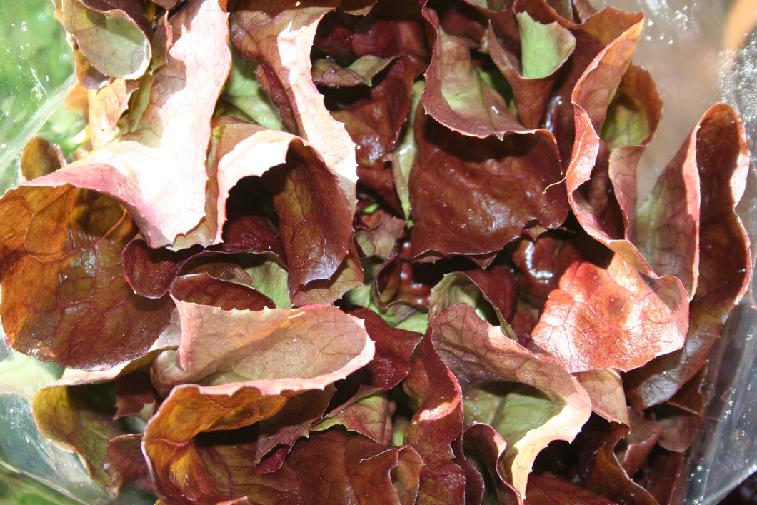 LETTUCE Fresh Local Lettuce Mix 250g