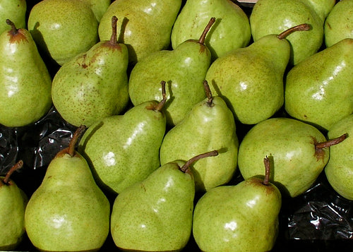 PEARS Fresh Local Packham 1kg