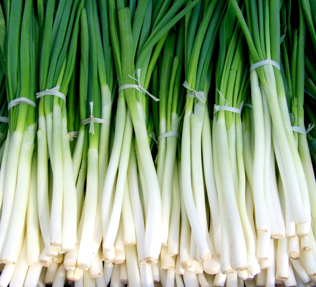 ONION Fresh Local Spring Bunch