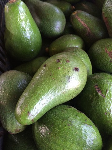 AVOCADO Organic Shepard each