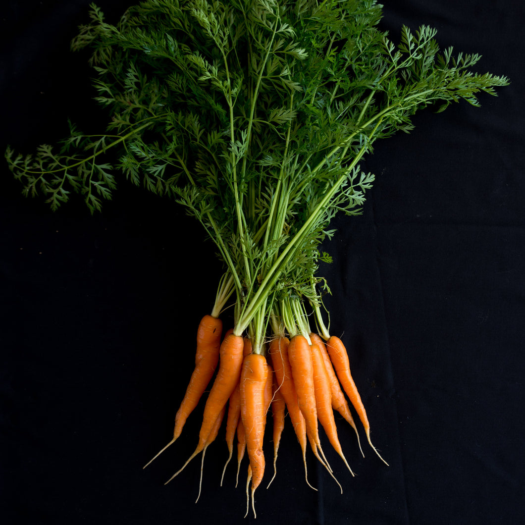 Carrots (Orange w/tops)