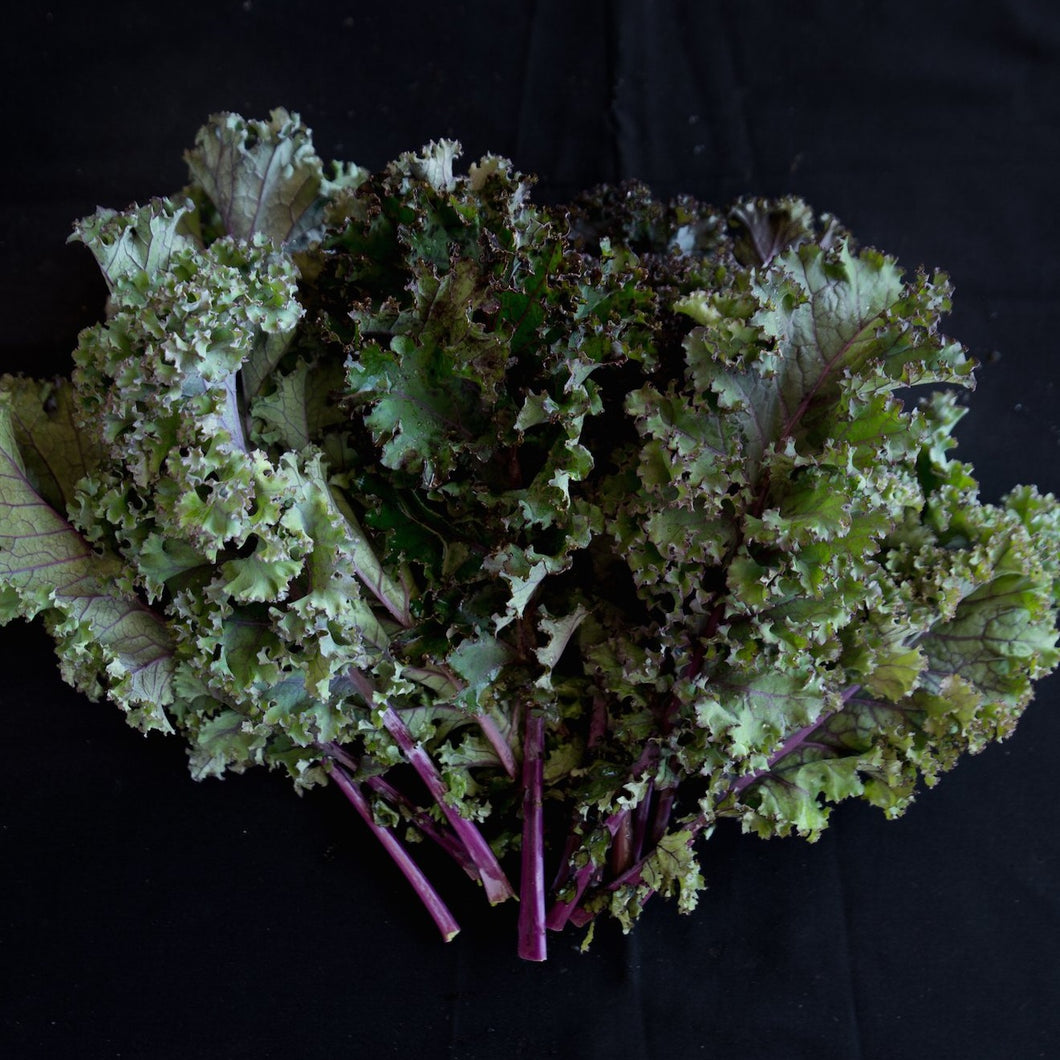 Kale (Red)