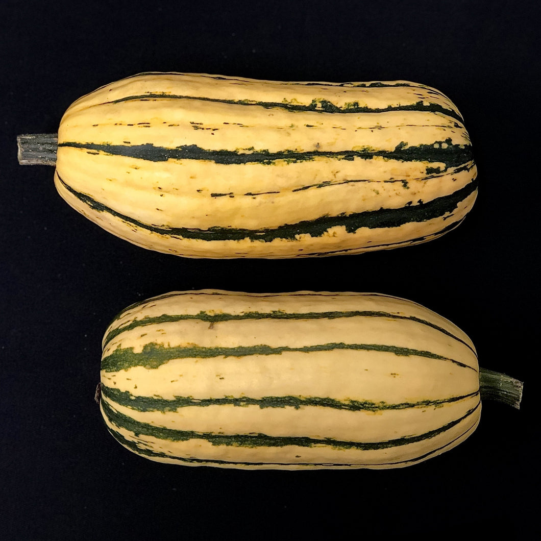 Winter Squash (Delicata)