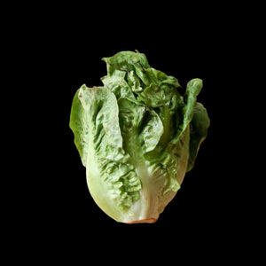 Lettuce (Butterhead, Curly, Romaine)