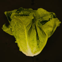 Load image into Gallery viewer, Lettuce (Butterhead, Curly, Romaine)