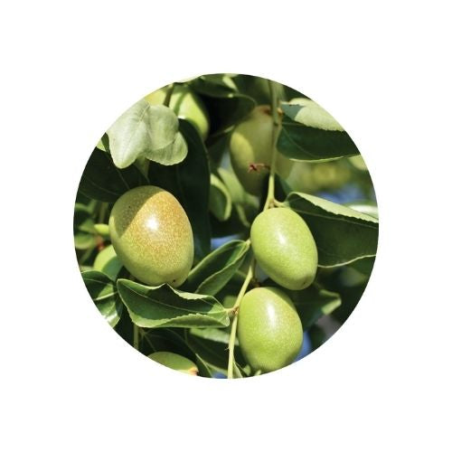 Jojoba Oil - 100ml