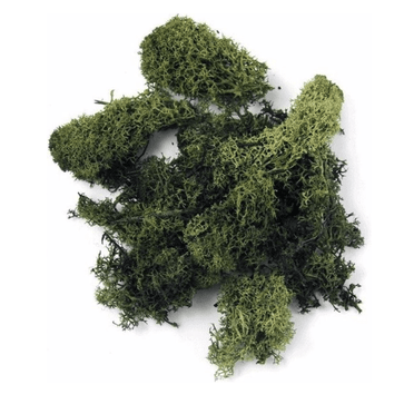 Decoration Hobby Moss Dark Green - 100G - only5pounds.com