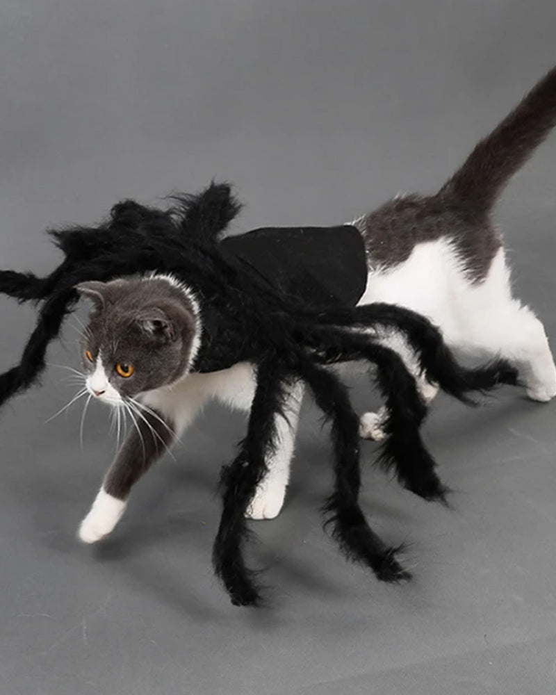 Halloween Spider Design Cat Costume