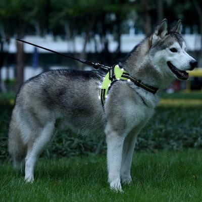 LED Light Durable Pet Dog Chest Strap