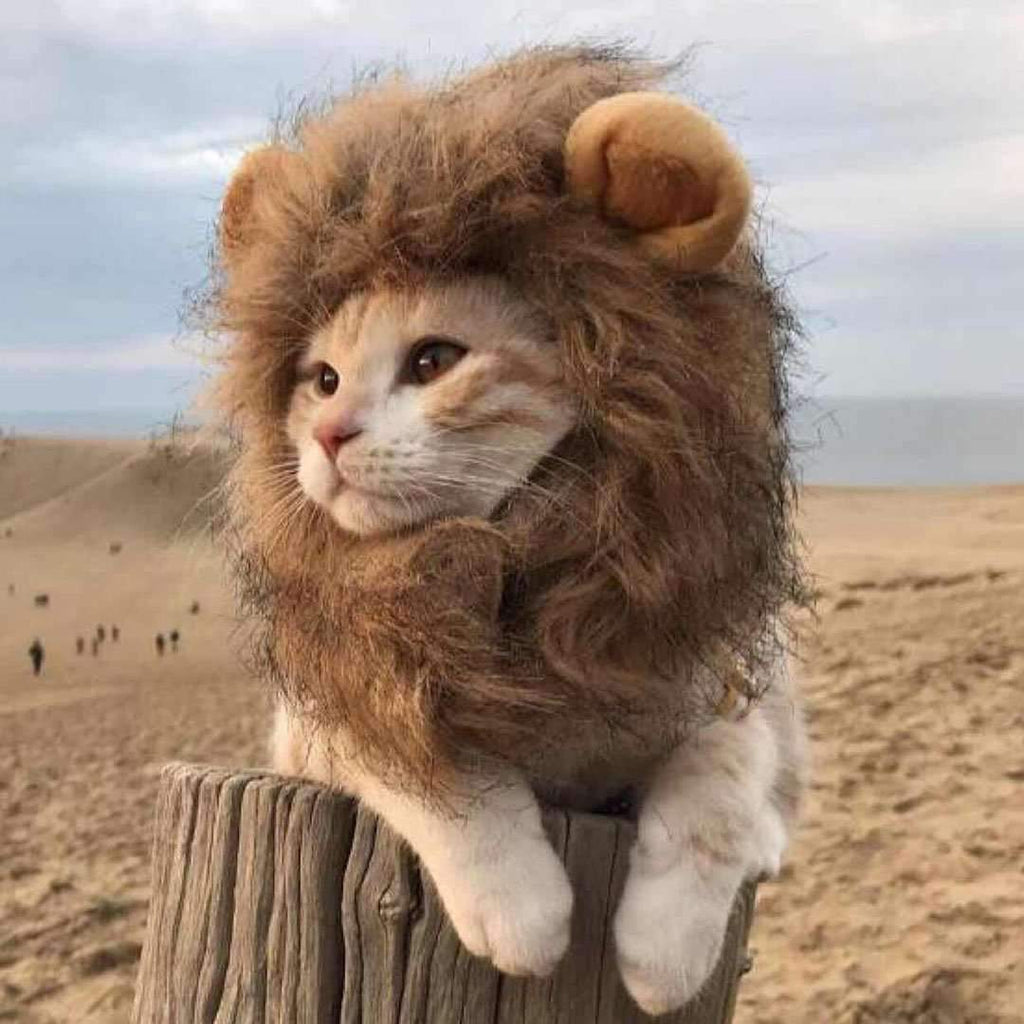 Cute Lion Design Pet Hat Puppy Custom For Small Pet