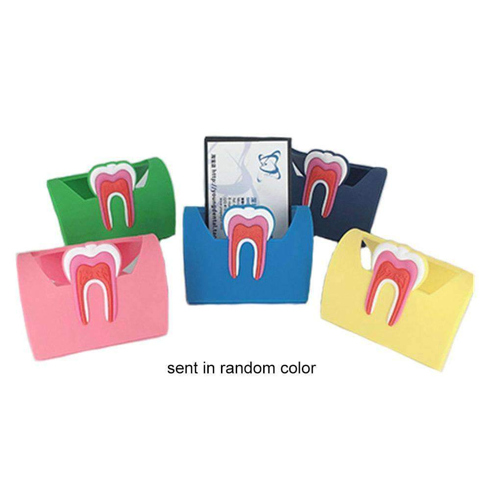Colorful Dental Cute Card Holder Rubber Molar Shaped Name Card Case Display Stand for Dental Office Random Color