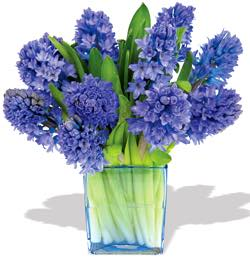 The FOF Hyacinth Vase